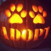 LIONS AND TIGERS AND BEARS, OH MY, IT'S HALLOWEEN TIME – PET SAFETY TIPS