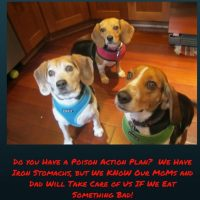 QUICK ACTION MAY SAVE YOUR PET'S LIFE – Create a Plan Just in Case Your Pet is Poisoned