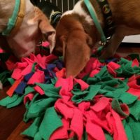 Jazz Up Your Pet's Day – Use a Snuffle Mat!